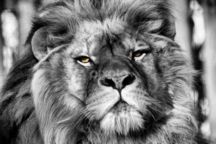 Devour (Vigilant Edit) by Dark Reid - Animals Lions, Tigers & Big Cats ( hunter, lion, carnivore, panthera leo, mane, whiskers, darkled, portrait, apex predator, eyes )