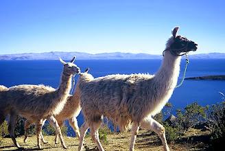 Photo: Jezioro Titicaca, Isla del Sol / Titicaca lake, Isla del Sol