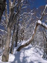 Photo: 樹間の狭い尾根