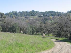 Photo: Yoga Farm, Grass Valley, CA - walk from Durga temple