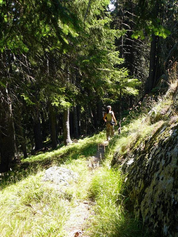 Спускане през гората