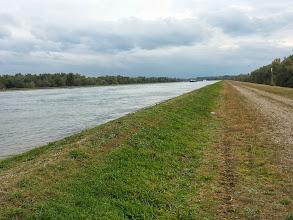 Photo: Le Rhin côté français, vers Marckolsheim (67)