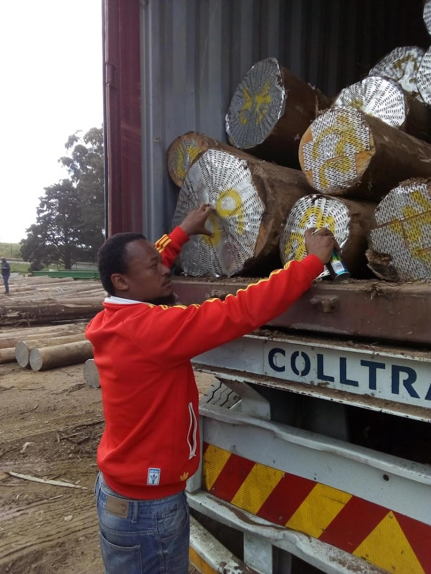 Xolani Ntuli owns XKG, a timber and logistics company that recently secured a contract to supply timber to a furniture manufacturing company in China.