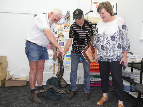 Snake handler Harvey Black discusses his latest 'catch'  a python weighing several kilograms, which fascinated observers Lionel Hardman and Traci Morley in The Courier office. The python was safely released back into the wild.