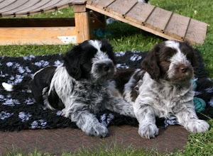 Photo: sehr niedlich die 2 (Ellie und Toffie)