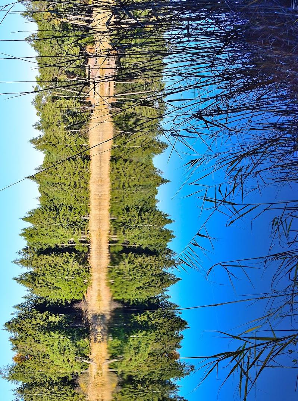La strada nel bosco di FlyBoy
