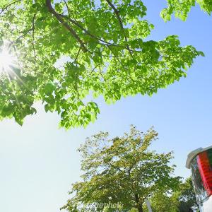 ヴォクシー  ZRR80W ZS 煌 平成29年式のカスタム事例画像 kazuu(Team..Nexus)さんの2020年05月14日15:25の投稿