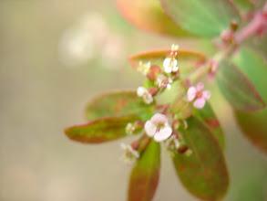 Photo: tiny flowers
