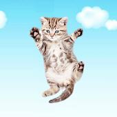 Kitten Clicker