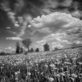 by Dragan Milovanovic - Black & White Landscapes