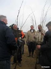 Photo: Træerne gøres klar