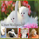 Download Kitten Wallpapers For PC Windows and Mac
