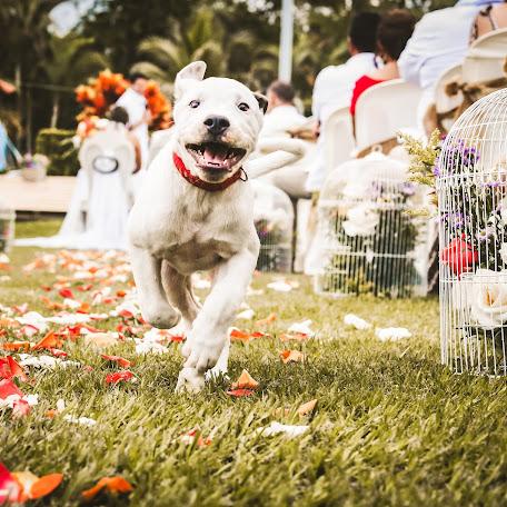 Fotógrafo de bodas Vicale Fotografía (VicaleEmpresad). Foto del 28.11.2017