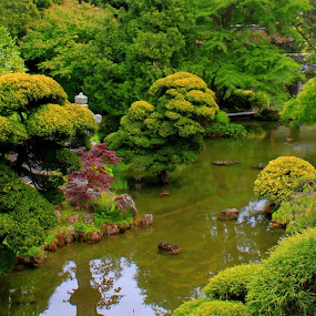 Zen Garden by Amory Godwin Grijaldo - Nature Up Close Flowers - 2011-2013