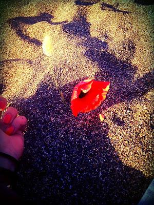 Fiore dalla sabbia di lisao