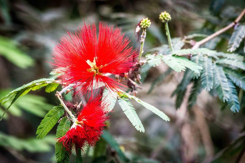 Fiore in rosso di SosiusPhoto
