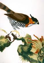 Photo: Pochoir Ornate Hawk-Eagle, 36.5  high by 25 wide