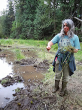 Photo: Irene Manley spreads aquatic seeds she has collected on the soil surrounding the restored wetlands.