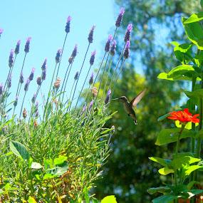 Lavender Fan by Greg Harrington - Nature Up Close Flowers - 2011-2013