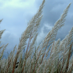 kash and the couds 3 by Riju Banerjee - Nature Up Close Leaves & Grasses