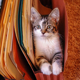 file under kitten by Scott Fishman - Animals - Cats Kittens