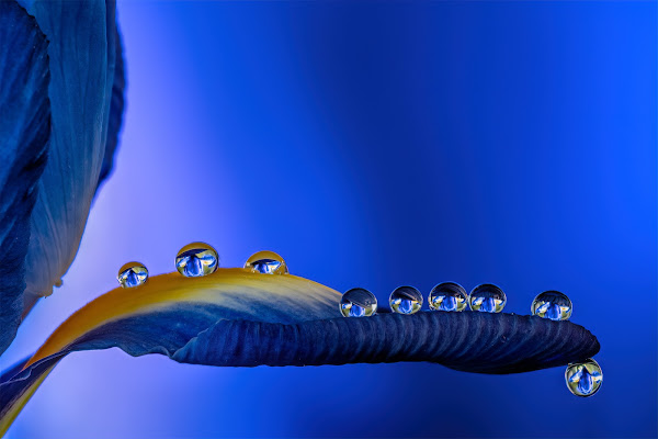 Drops of blue di Sara Jazbar