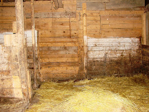 Photo: Neighbors made a stable in the cabin for a pig. Pig removed.