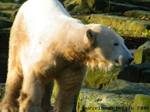 Photo: Knut muss alles im Blick behalten ;-)