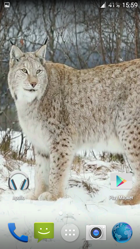 Lynx. Video Wallpaper