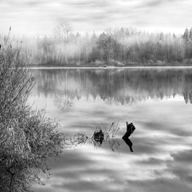 Lake Cassidy  by Todd Reynolds - Black & White Landscapes