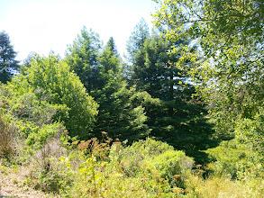 Photo: Edge of the woods