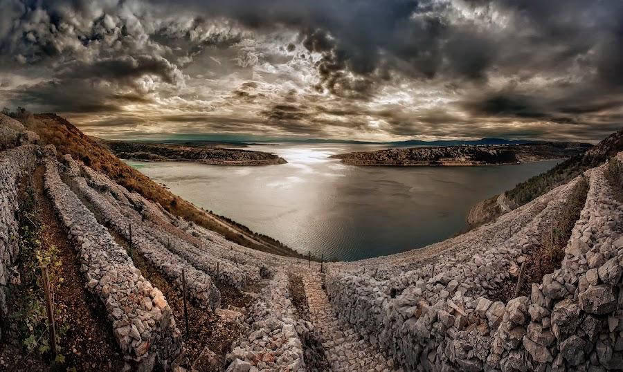 Terraced vineyard by Vasja Pinzovski - Landscapes Weather