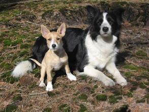 Photo: Weppi & Chiqi (photo Jenni Parkkali)