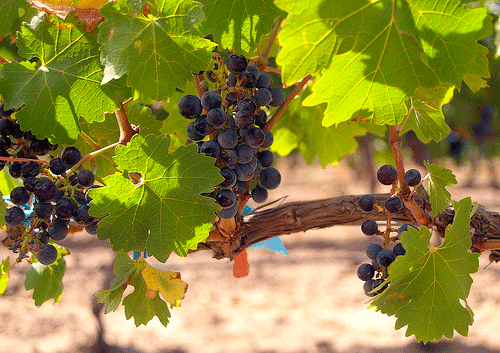 Wines from Spain advance on France and Italy