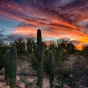 Patriotic by Charlie Alolkoy - Landscapes Deserts ( clouds, sky, desert, sunset, arizona, tucson, sunrise, cactus )