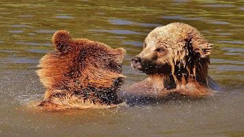Tile Puzzles · Wild Animals