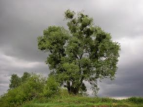 Photo: duże drzewko