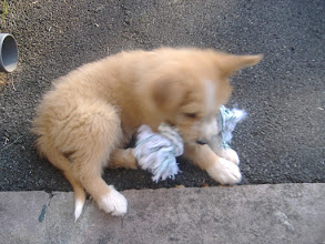 Photo: Nuestro perro Laika