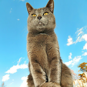 King of the World by James Cole - Animals - Cats Portraits