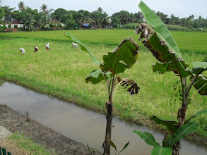 Photo: Looking onto the paddy fields during a massage