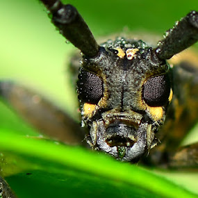 My new sunglasses by Stevie Go - Animals Insects & Spiders ( water, macro, glassess, insects, eyes,  )