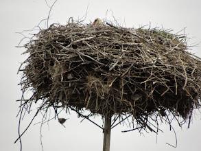 Photo: Bocianie gniazdo zasiedlone na piętrze i na parterze