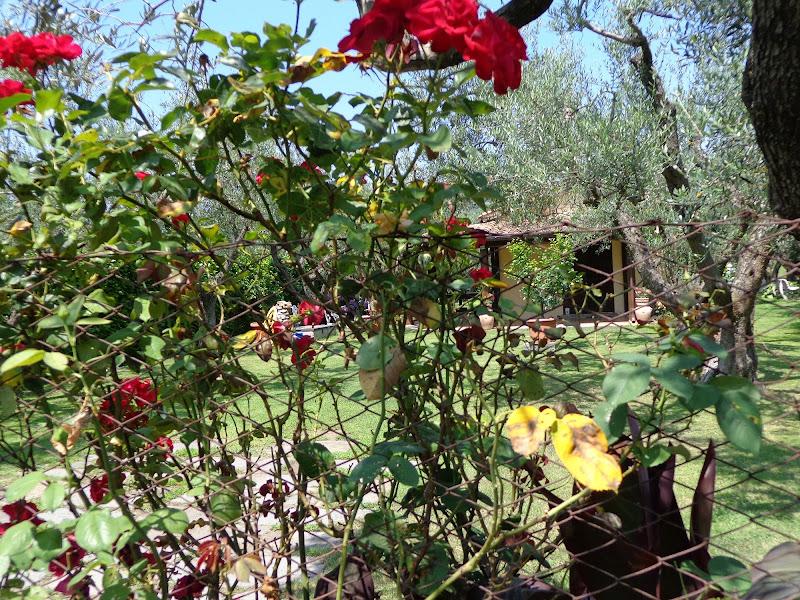 giardino  fiorito di cristiana suzzi