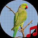 Parakeet Sounds ~ Sboard.pro icon