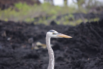 Photo: Herons - possibly related to those in Wisconsin
