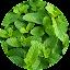 طب الأعشاب و فوائد الأعشاب icon