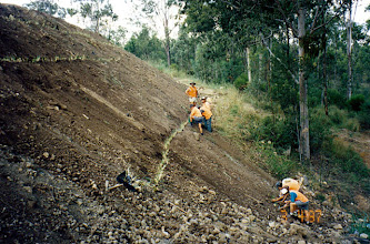 Photo: AUS-RY44  Australia - Railroads in Queensland. Vetiver used to stabilize an  embankment.
