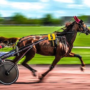cheval hdr 2.jpg