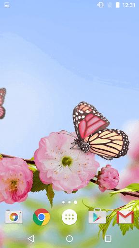 蝶 ライブ壁紙