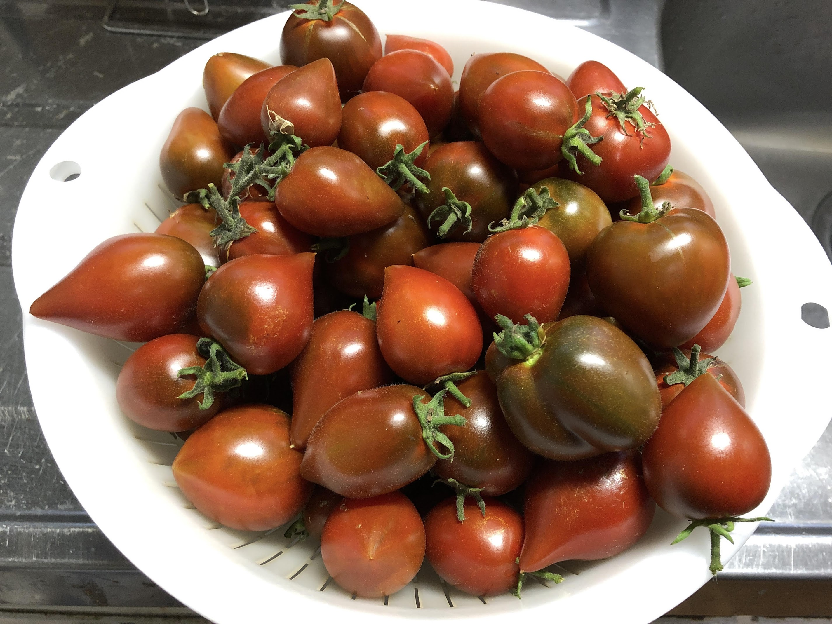 Black Prince Tomato